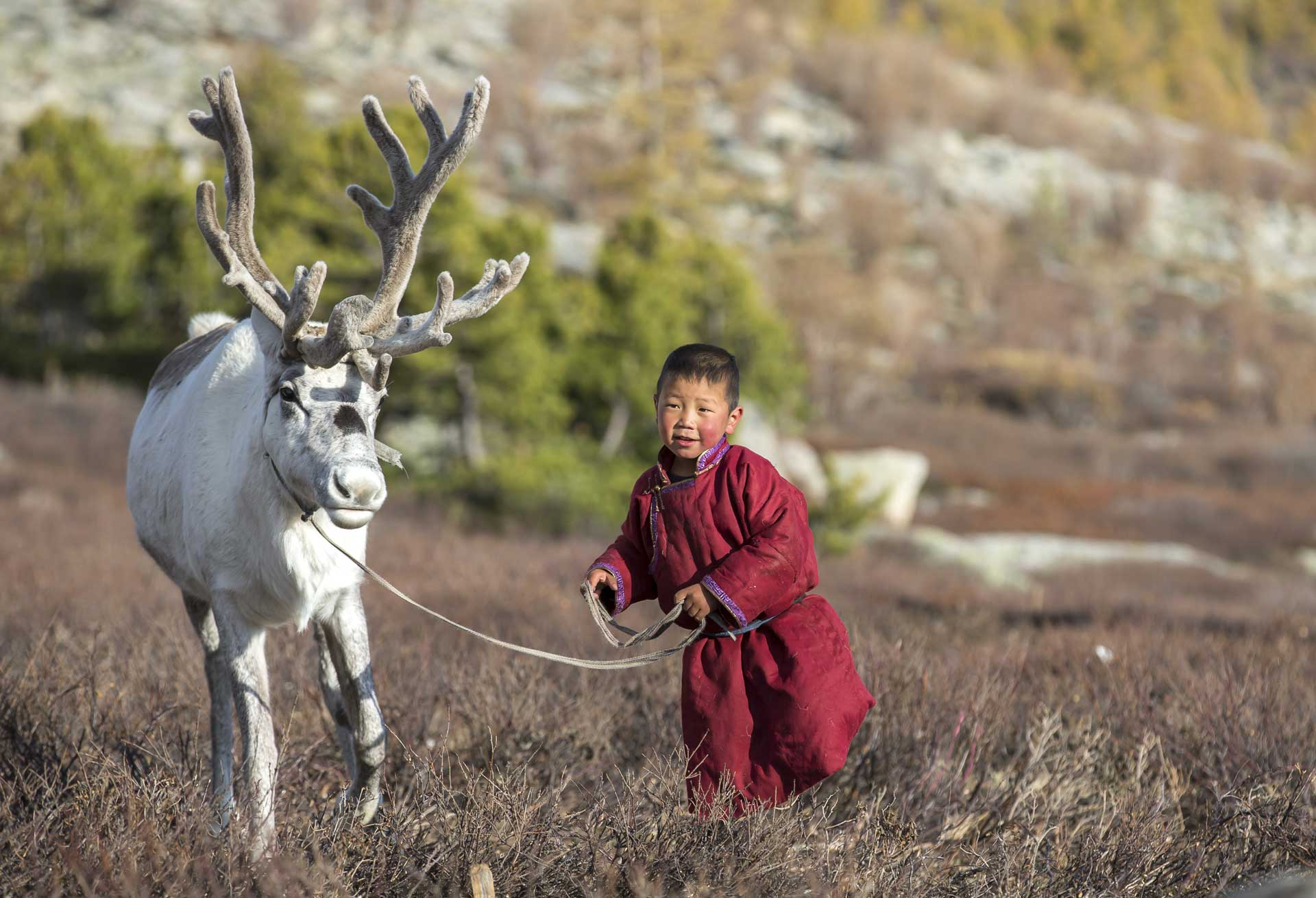 Mongolia-travel-reindeer-boy
