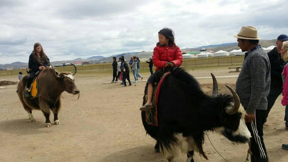 Yak riding