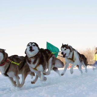 Dog-sledging.jpg