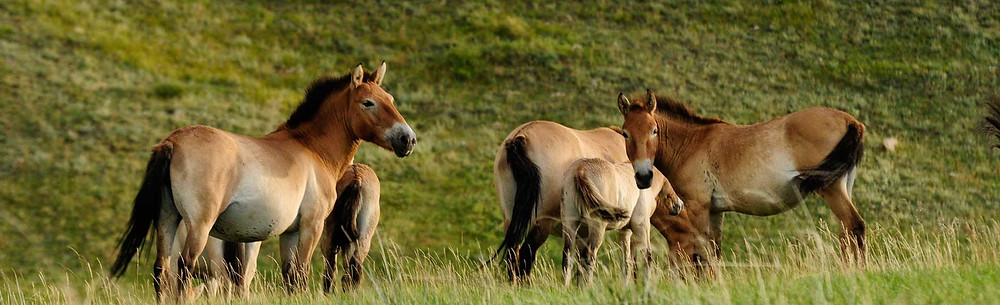 Khustai National Park