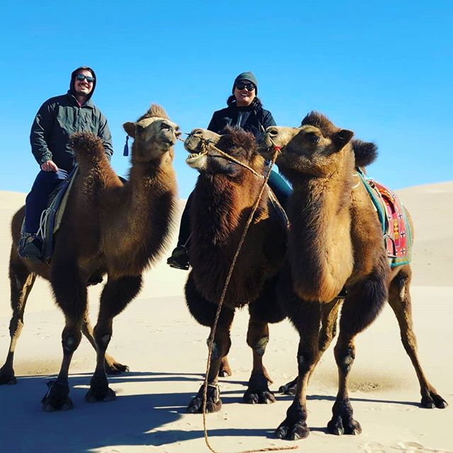 Camel 🐫 trial in the South gobi.