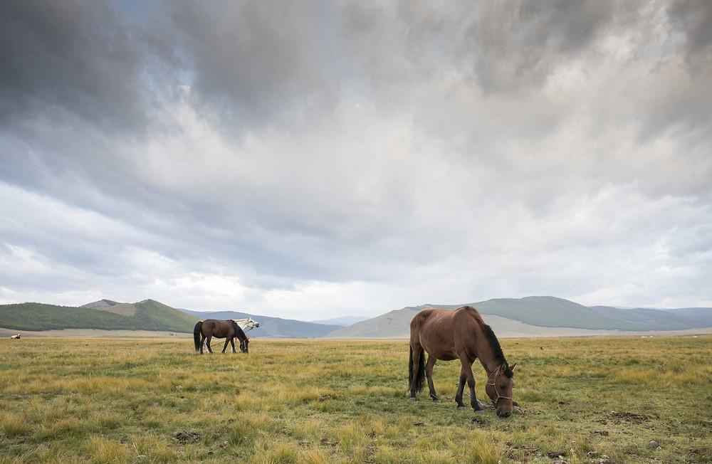 Mongolia wild steppe