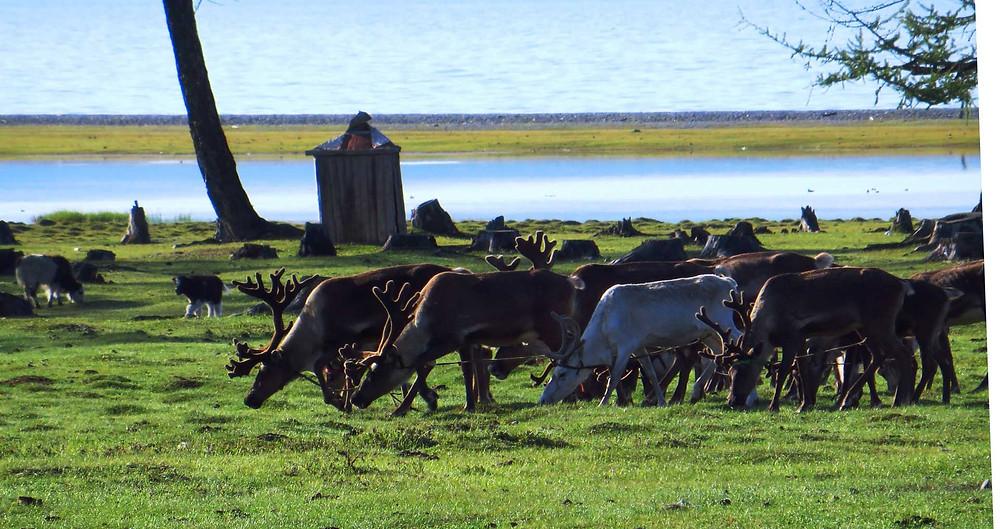 Mongolia travel Enza tours