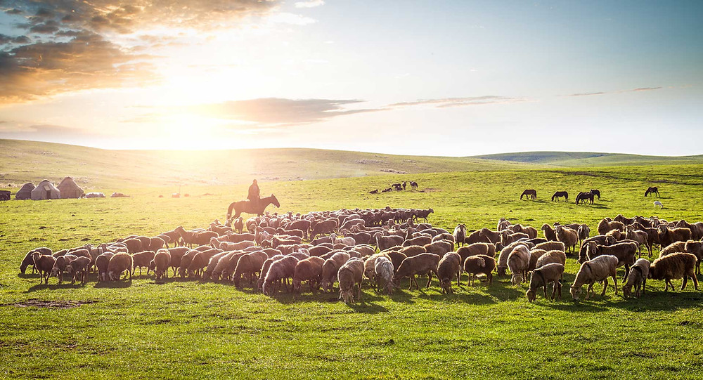 mongolian nomadic life