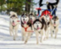 Dog-sledging-1.jpg