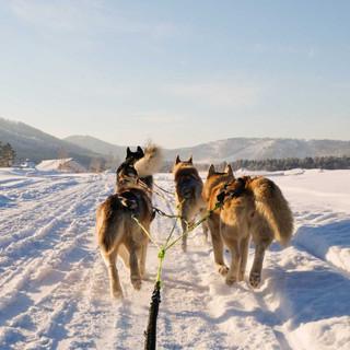 Dog-sledging-2.jpg