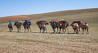Mongolia travel camels