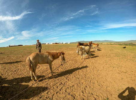 Nomadic lifestyle is still 30% of population in Mongolia 🇲🇳