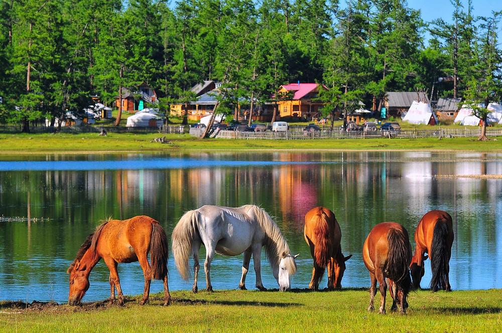 khvusgul lake camps and horses Mongolia travel Enza tours