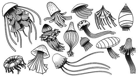 ASN_Jellyfish_V1.jpg