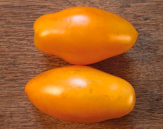 TOMATO Orange Icicle