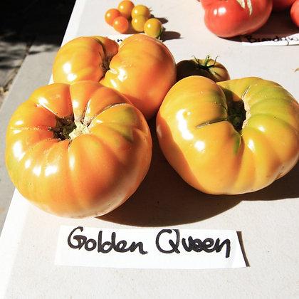 TOMATO Golden Queen