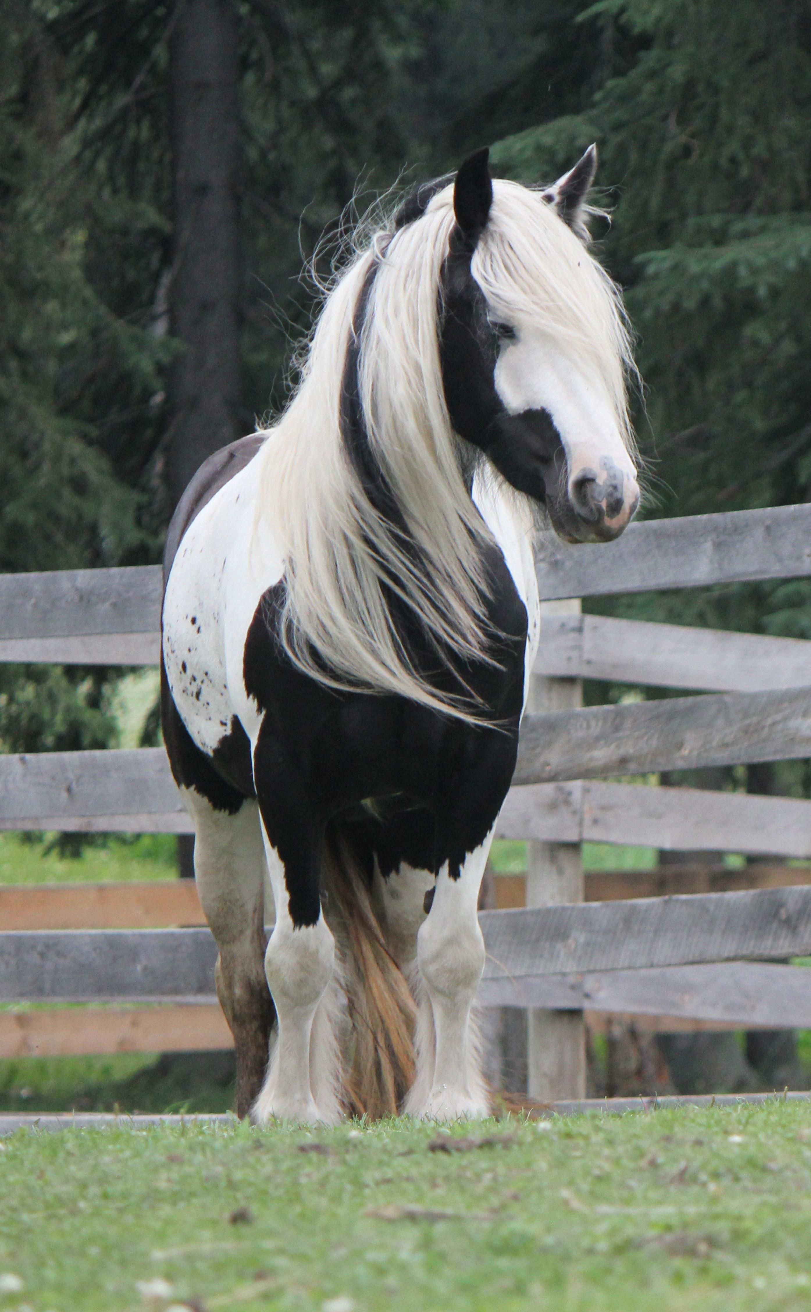 Horses 2013 074