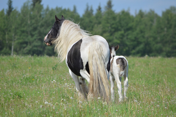 Tokeso with her foal