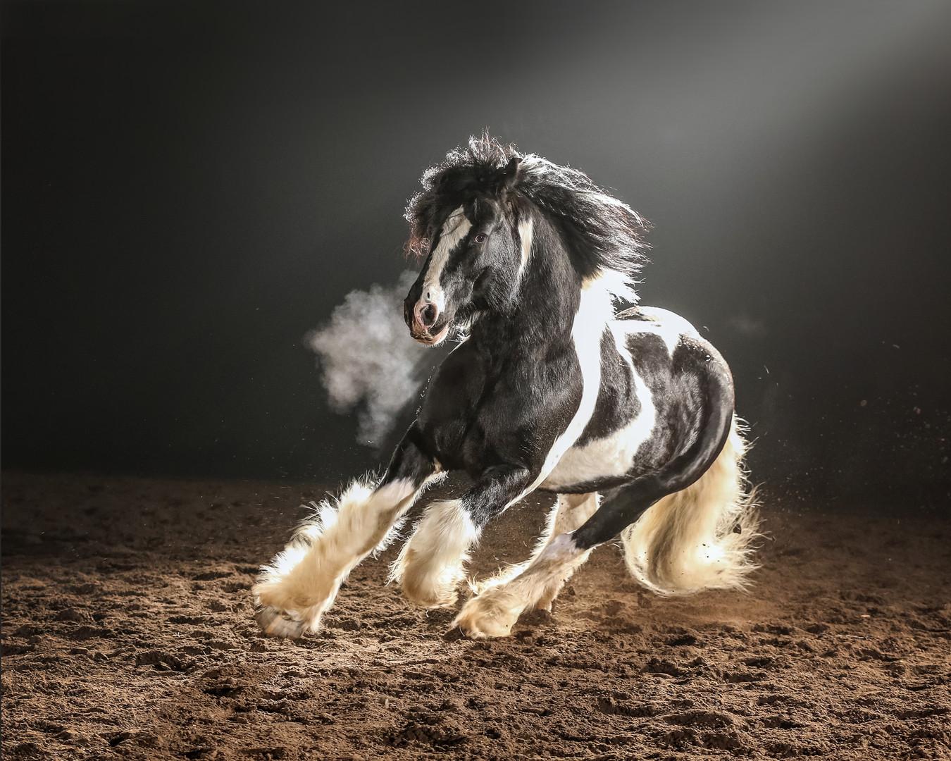 Romeo. our Drum stallion