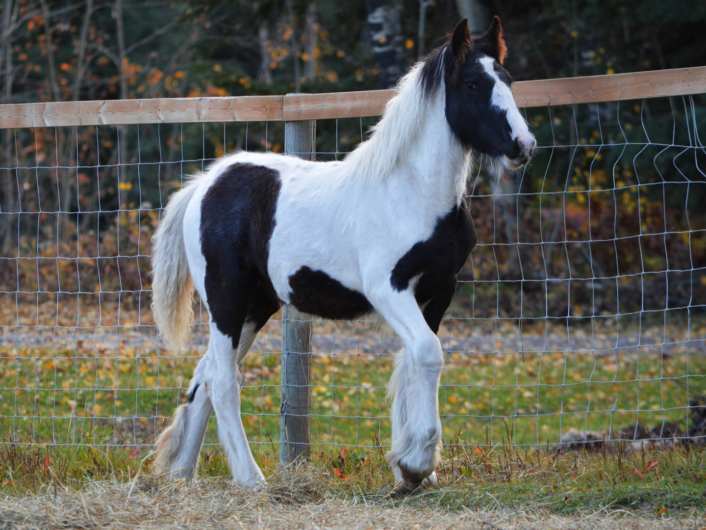 Safira as a foal