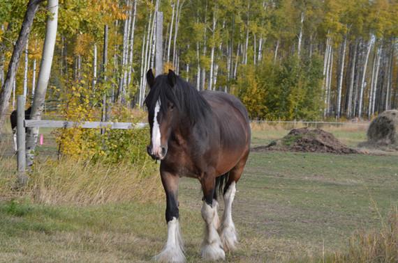 Teren, Shire mare