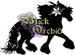 Black-Orchid-logo_edited.png