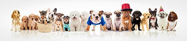 Puppies For Sale Long Island NY,NYC,NJ,NYC,USA