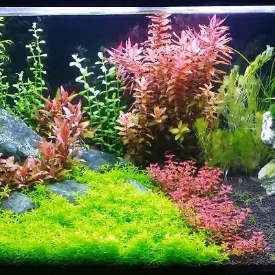 planted tank.jpg