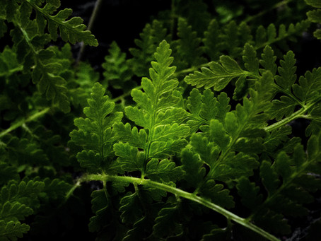 Livin' La Vida Verde:  Happy Earth Month!