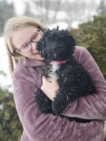 Cavapoo, puppy, Wisconsin, Minnesota