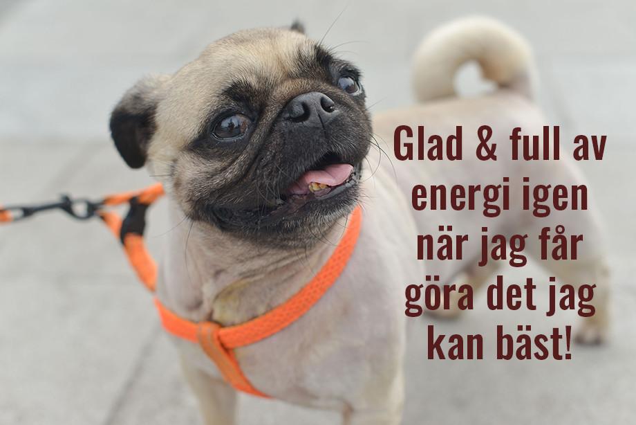 Glädje och energi av att fokusera på det man kan