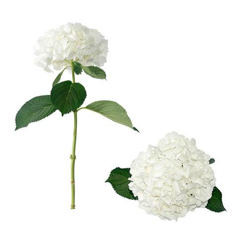 White Designer Hydrangea