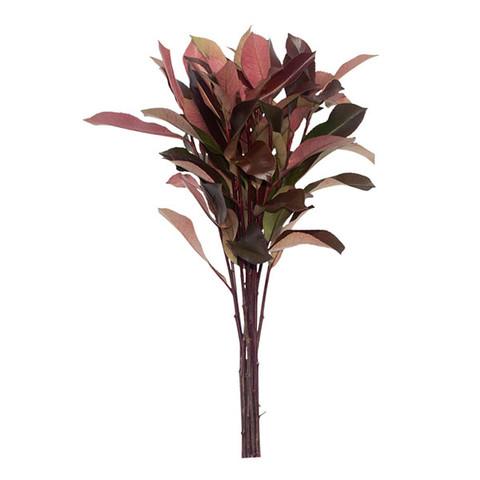 Red Photinia