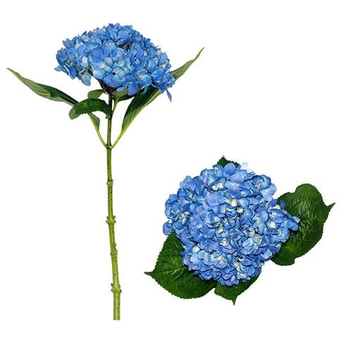 Shocking Blue Select Hydrangea