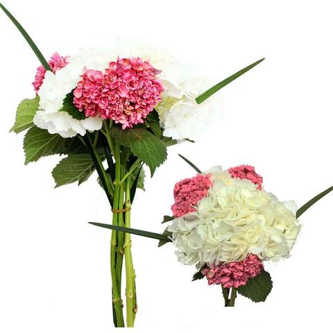 Women's Day N°2 Bouquet