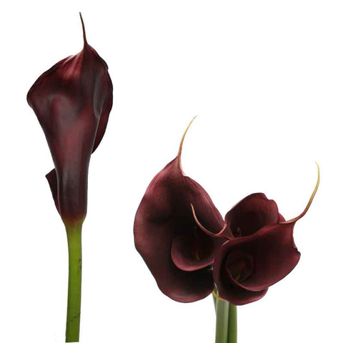 Brown Airbrushed Calla