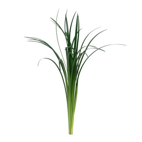 Liligrass