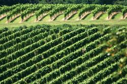 Vignobles Bergeracois