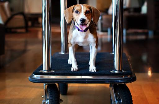 Hospedagem Pet Friendly: como escolher um bom hotel para ficar com seu pet