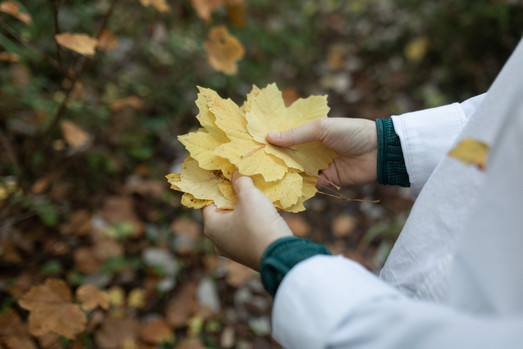 Rooral participant gathering Autumn leaves