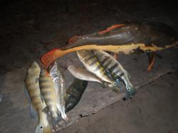 Pesca Esportiva - Tocantins