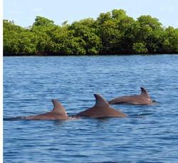 dolphin-tour2
