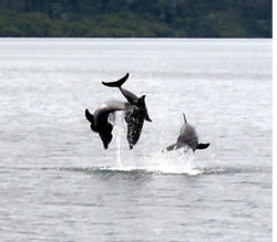 dolphin-tour1