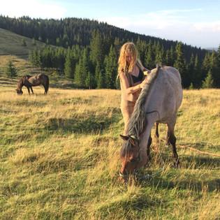 REX Horse Travel in Romania