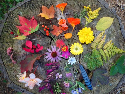 Fall Colours photo challenge