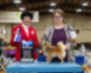 Chihuahua Long Coat 19 Sat BOW Judge Bar