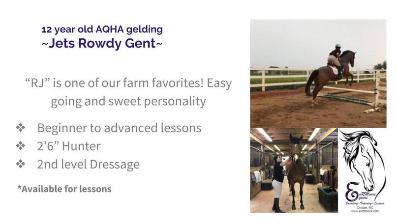 Lesson Horses (7).jpg