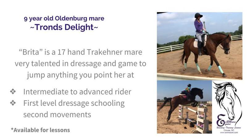 Lesson Horses.jpg