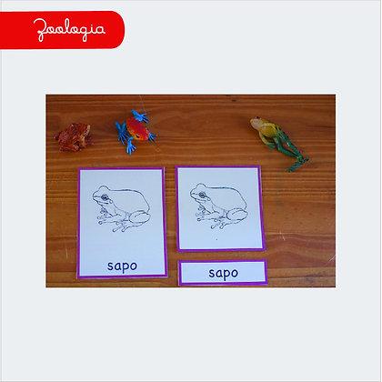 Cartão de 3 Partes - Sapo (zoologia)