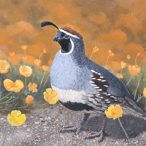 OIL PAINTING: MAKE A GAMBEL'S QUAIL STUDY with Bruce Berry...Oct 19-21 More info