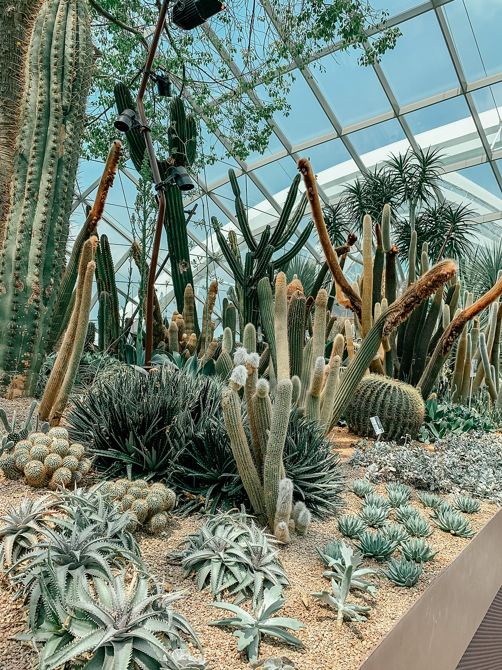 A Guide to Singapore | Flower Dome Gardens by the Bay | A Style Alike