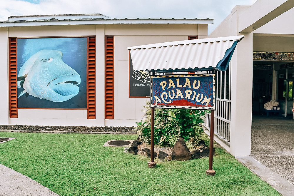 Palau Aquarium | Koror | A Guide to Palau | A Style Alike
