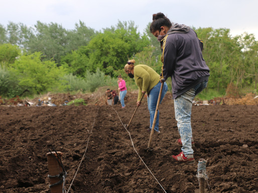 Huerta agroecológica comunitaria en Carlos Beguerie