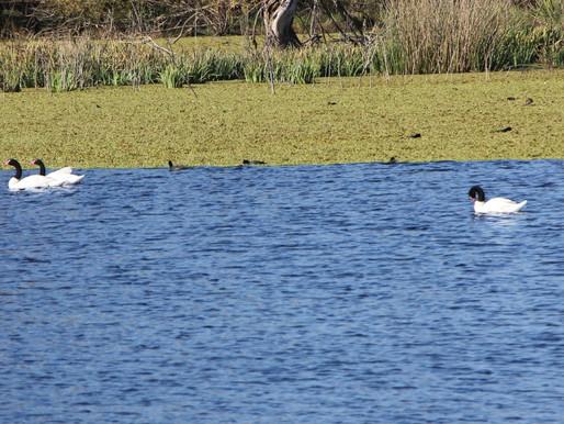 """Provincia de Buenos Aires: """"Laguna de Ratto"""", un espectáculo natural en Roque Pérez"""
